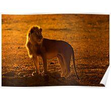 Backlit King Poster