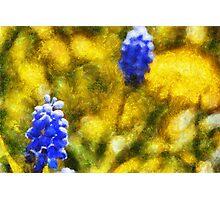 Grape Hyacinth amid Dandelions Photographic Print