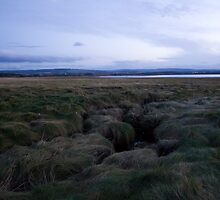 Marshes at Kinloss by AlexanderFord