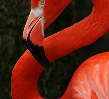Pink Flamingo by eangelina64