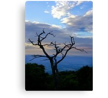 Hawk's Roost Canvas Print