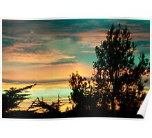 Pine Silhouette On Sunset Clouds Poster