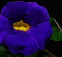 I see yellow, purple, blue... by Dennis Rubin IPA