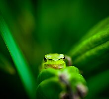 Baby Frog by Mel Sinclair