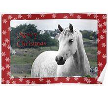 Connemara Pony Christmas Card -Type 2 Poster