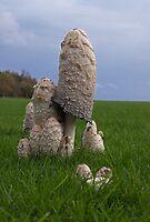 Mushrooms by LorrieBee