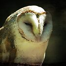 Owl by Eve Parry