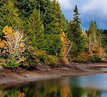 Autumn Shoreline by Lynnette Peizer