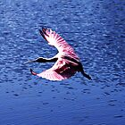 Spoonbill in Flight 2 by Nukee