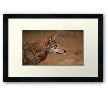 Wile E. Coyote Framed Print