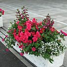 Floral Display with Red Begonias and Penstemon by BlueMoonRose