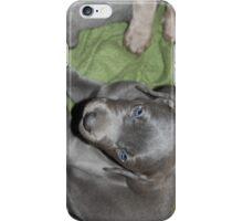 Weimaraner iPhone Case/Skin