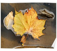 3 Leaves In A Stream - 6 Mile Gorge Poster