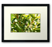 Lion - at the Apex of a Small World Framed Print