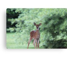 Where Is My Mom Canvas Print