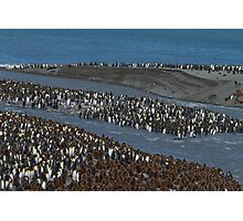 Penguins Galore, St Andrew's Bay, South Georgia Photographic Print