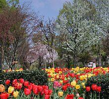 Brandon Park Spring Garden by Gene Walls