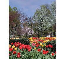 Brandon Park Spring Garden Photographic Print