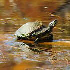 Little Turtle Soaking Up The Sun by Cynthia48