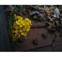 """""""A secret entrance""""  Photographic Print"""