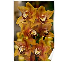 Golden Orchid1 Poster