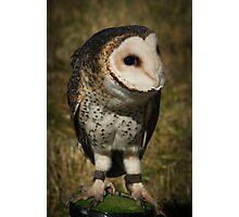 I am a bird from Australia Photographic Print