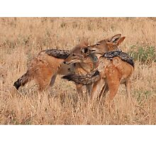 Okonjima - Black Backed Jackals Photographic Print