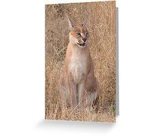 Okonjima - Caracal Greeting Card