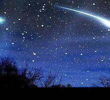 Starry Night © by Dawn M. Becker