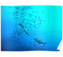 PELAGIC BREEZE Poster