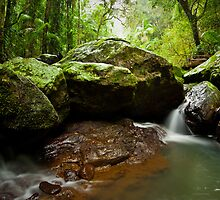 Plunging Deep Within The Rainforest by Mel Sinclair
