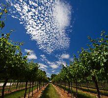 Barossa Skies by KathyT