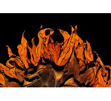 Flame on! Photographic Print