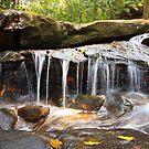 Oxford Falls , NSW Australia by Doug Cliff
