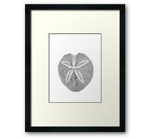 BLACK AND WHITE SEA-URCHIN Framed Print