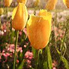 Yellow Tulip in Rain by Julia Ott