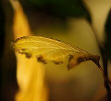 Autumn's Golden Flames by Sally Green