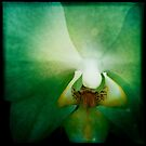 iPhone Orchid ~ Hipstermatic by TeAnne