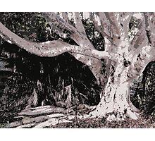 limbs of wisdom Photographic Print