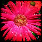 iPhone Gerbera ~ Hipstermatic by TeAnne