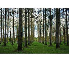 Loire Valley trees Photographic Print