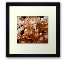 Orange Spotted Pipefish Framed Print