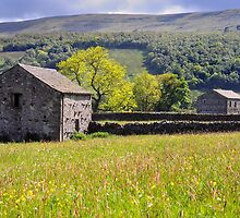 Summer Meadow, Wharfedale - The Yorkshire Dales by Dave Lawrance