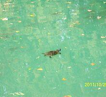 Una tartaruga nel Laghetto di Maria Luigia...Parma - Italy -visualizzazioni 400 al 28 marzo 2012 -- featured rb explore 2 febbraio 2012 --- by Guendalyn
