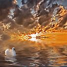 Swan at Sunrise by Kathy Weaver