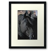 Whippoorwill Ursa Major Framed Print