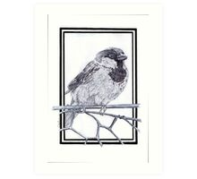 House Sparrow - Passer domesticus Art Print