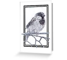 House Sparrow - Passer domesticus Greeting Card