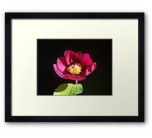 Paeonia sp. Framed Print