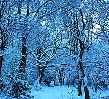 Winter Wood by clydeypops